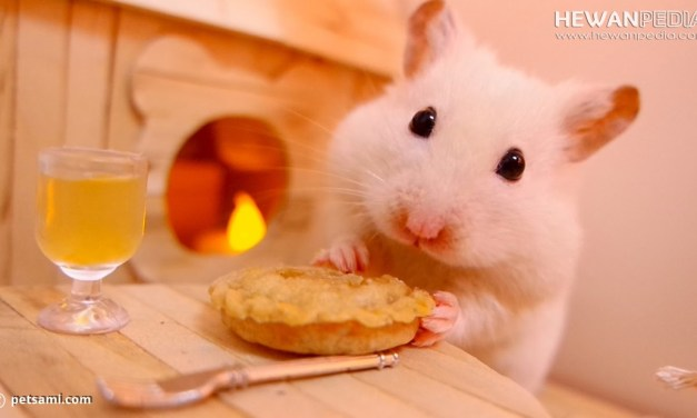 3 Jenis Makanan yang Bergizi untuk Hamster