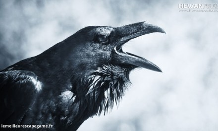 7 Mitos Pertanda Keberadaan Hewan di rumah Menurut Primbon
