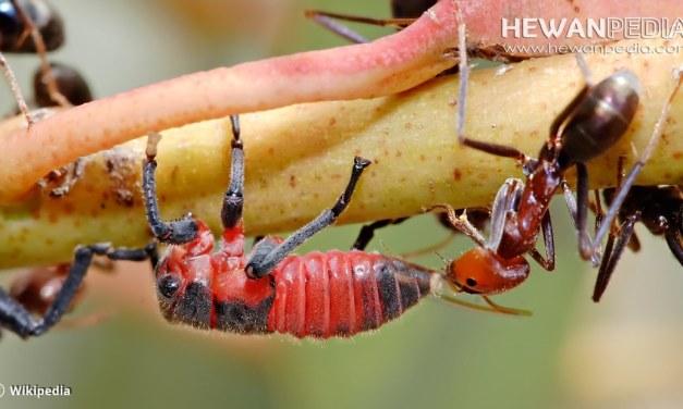 6 Manfaat dan Peran Penting Serangga Dalam Kehidupan Manusia dan Alam