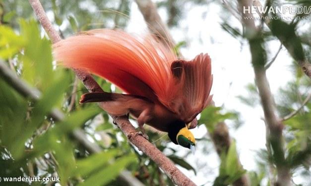 5 Taman Nasional di Maluku dan Papua serta Flora Fauna yang dilindungi