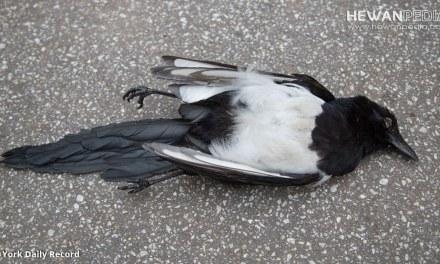 4 Faktor Utama atau Tersering Mengapa Burung Peliharaan Mati Mendadak