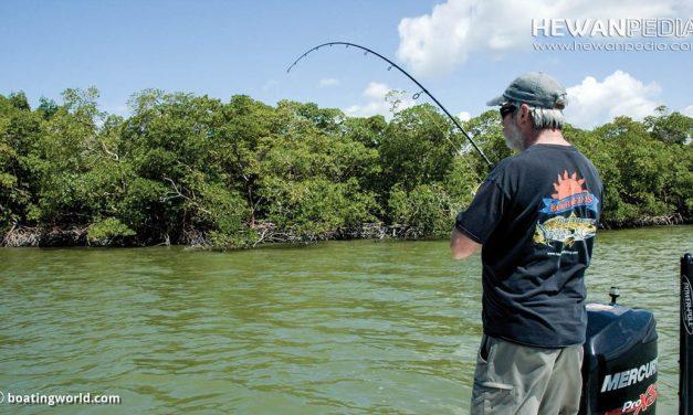 Tata Cara dan Dasar Ketika Mancing Ikan di Kawasan Bakau atau Mangrove