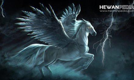 Cerita Mitos dan Sejarah Kuda Sembrani menurut Jawa dan Islam