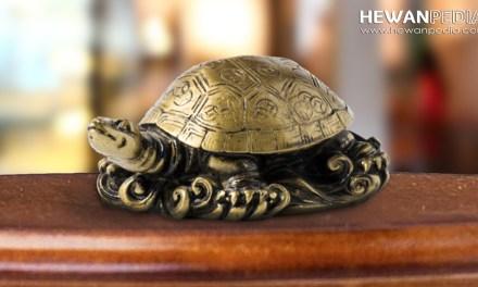 Mitos Keberuntungan Memelihara Kura-kura Menurut Feng Shui atau Cina