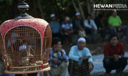 Doa Mujarab Menang Lomba Burung dalam Islam