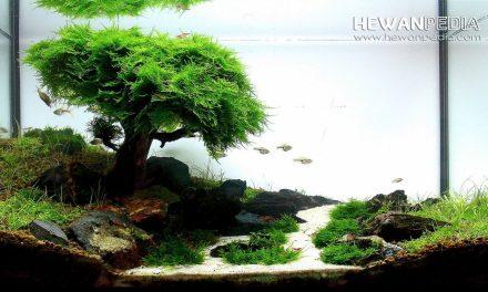 Panduan Cara untuk Memelihara dan Menumbuhkan Moss untuk Aquascape