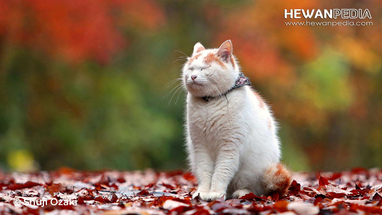 100 Inspirasi Nama Kucing Peliharaan Bergaya Asia Eropa Dan Afrika Hewanpedia