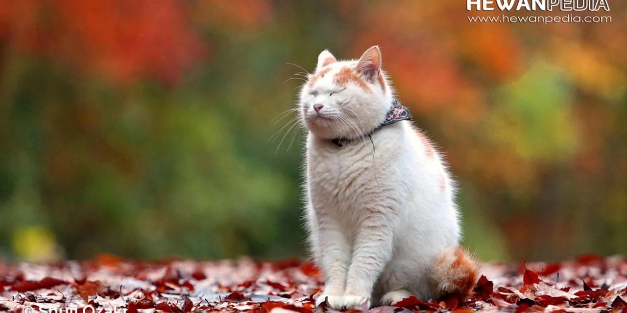 100 Inspirasi Nama Kucing Peliharaan Bergaya Asia, Eropa, dan Afrika