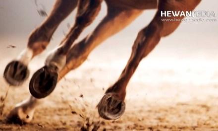 Mitos Tapal Kuda sebagai Penolak Santet menurut Primbon