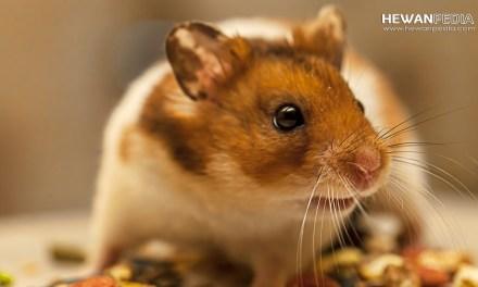 6 Jenis Makanan Hamster untuk Ternak Murah dan Sehat