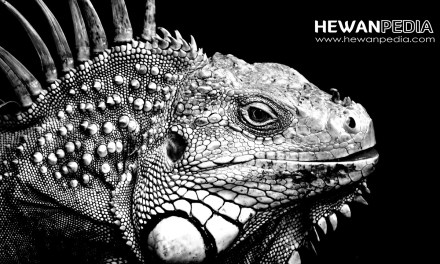 16 Arti Mimpi Iguana menurut Primbon Jawa