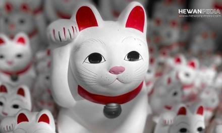 Mengenal Mitos Kucing menurut Budaya Jepang
