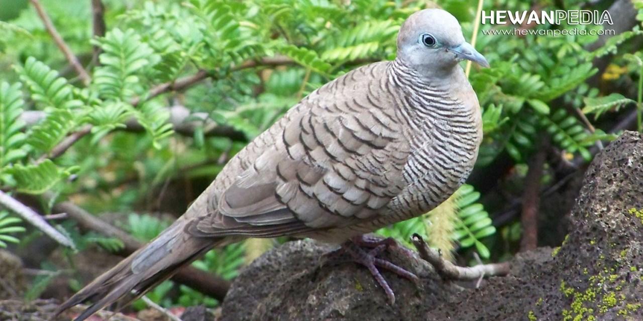 Alasan Mengapa Memelihara Burung Perkutut Harus Ganjil