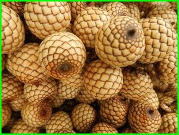 nama nama buah buahan di indonesia, nama buah buahan indonesia, nama nama buah di indonesia, nama buah langka indonesia, nama buah indonesia 7 huruf, senarai nama buah indonesia, daftar nama buah indonesia