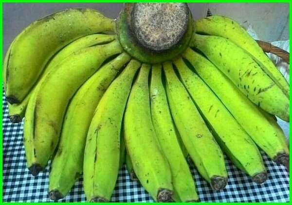 jenis pisang, nama jenis pisang, nama jenis pisang dan gambarnya, jenis pisang dan kegunaannya, senarai nama jenis pisang, nama jenis pisang di malaysia, gambar dan nama jenis pisang, apakah semua jenis pisang baik untuk diet, apa saja jenis pisang, berapa jenis pisang
