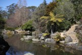 Blue-Mountains-Botanic-Gardens-36