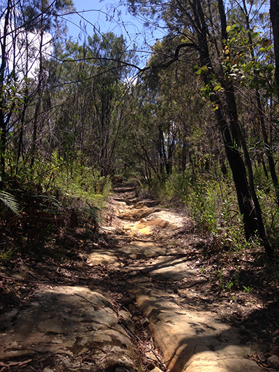 The trail on the way back