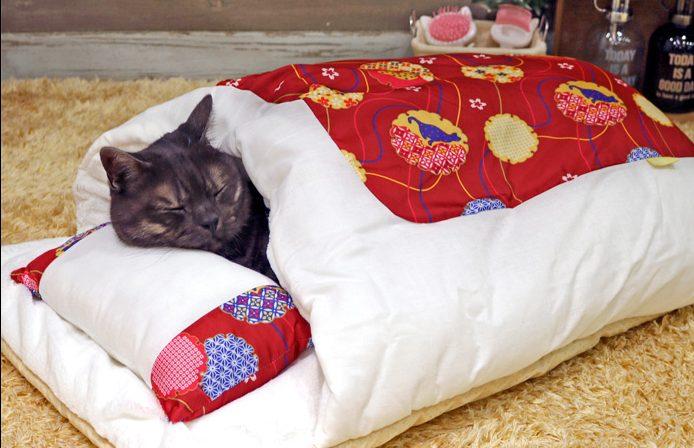 じめじめした季節こそ寝具の買い替えを!