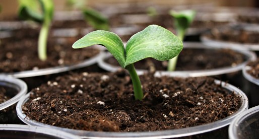 10 Tips for Starting Seeds for Your Garden this spring