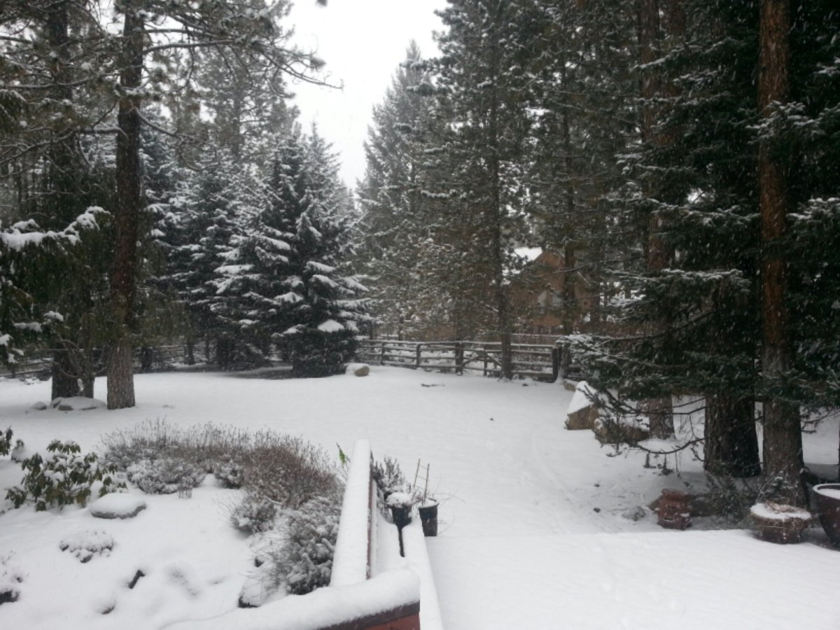 Snowfall in Spokane