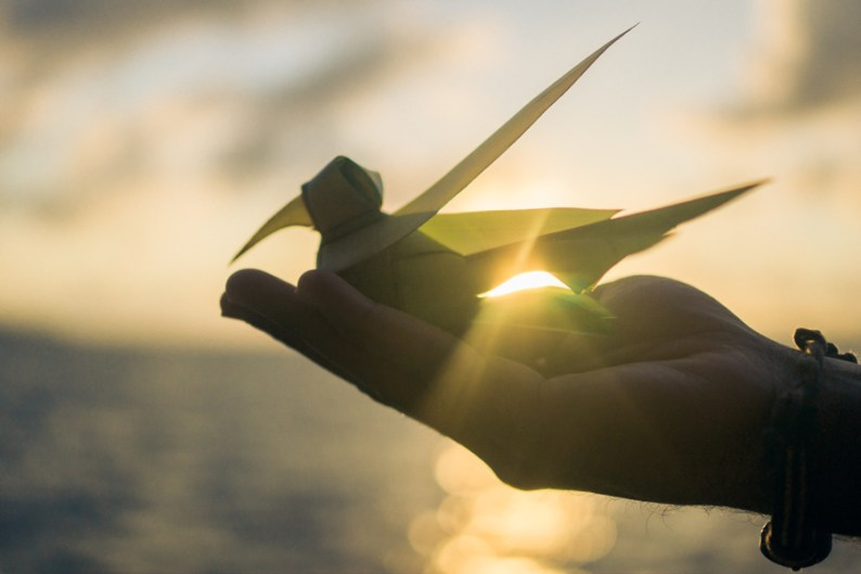 Maldives Palm Bird Sunset Romance