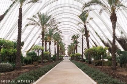 Ciudad de las Artes y las Ciencias | City of Arts and Sciences | Valencia