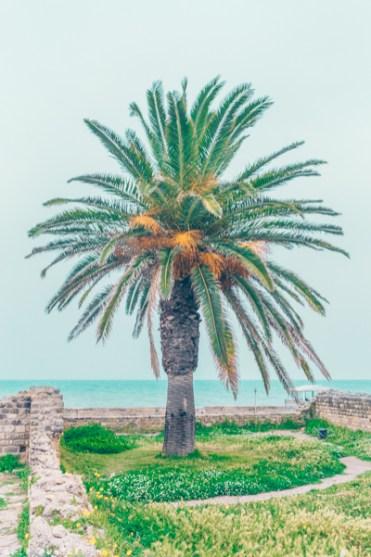 The Baths of Antoninus, Baths of Carthage, Tunis