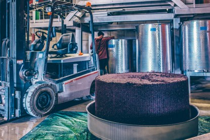 Organic grapes during processing at Terra Remota