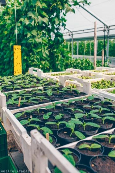Greenhouse on organic farm in Saalfelden Leogang