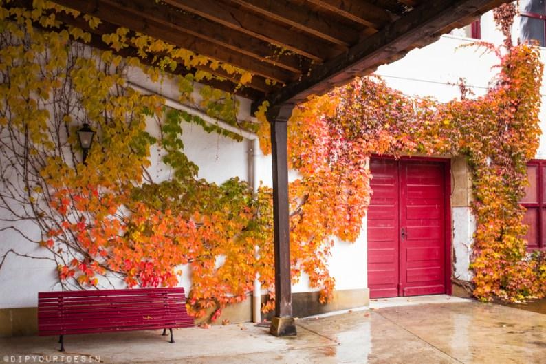 Ivy on wall at CUNE | CVNE | Bodega | Compañia Vinicola del Norte de España | Visit La Rioja