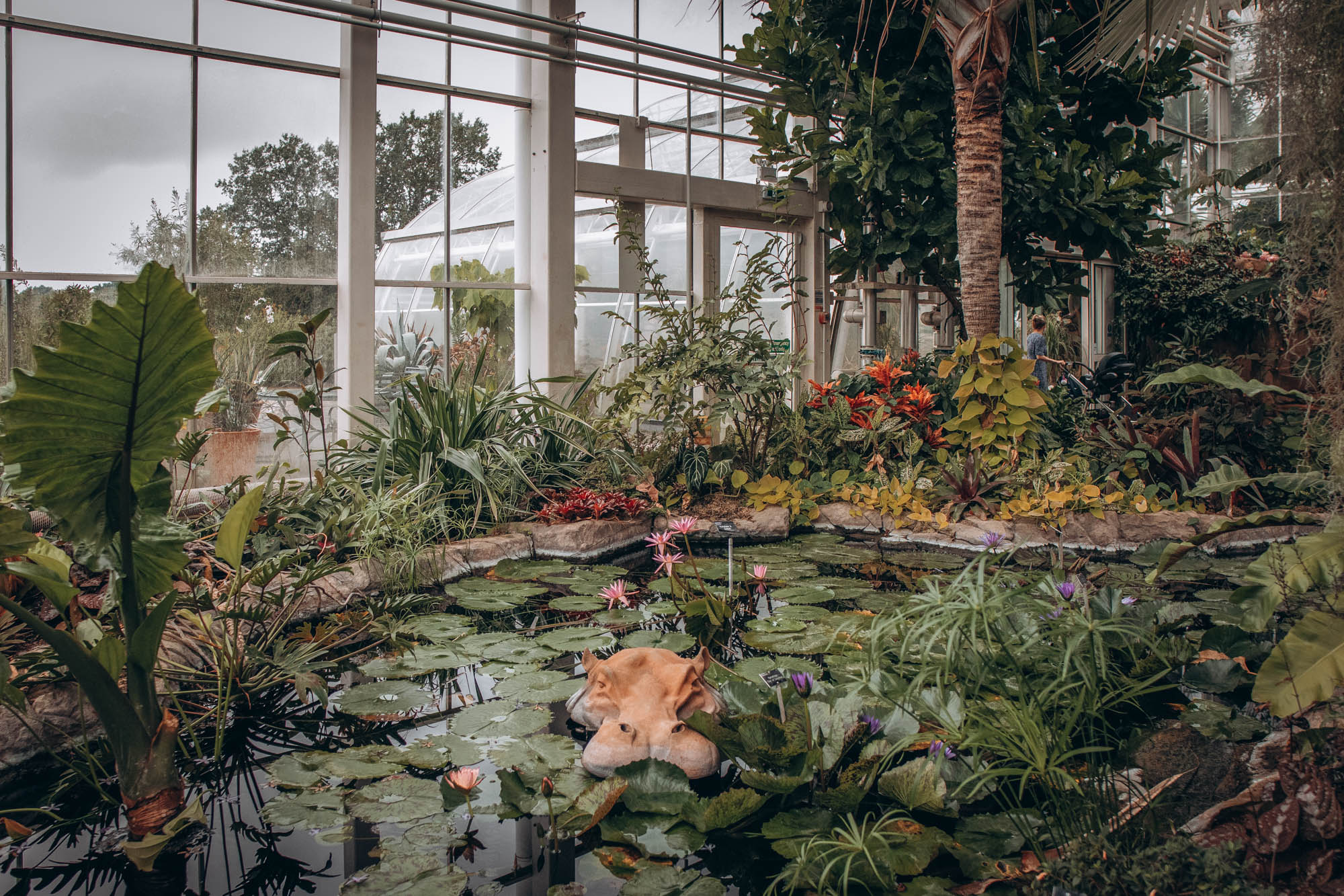 Tropical pool with water lily pads inside the Glasshouse at Wisley