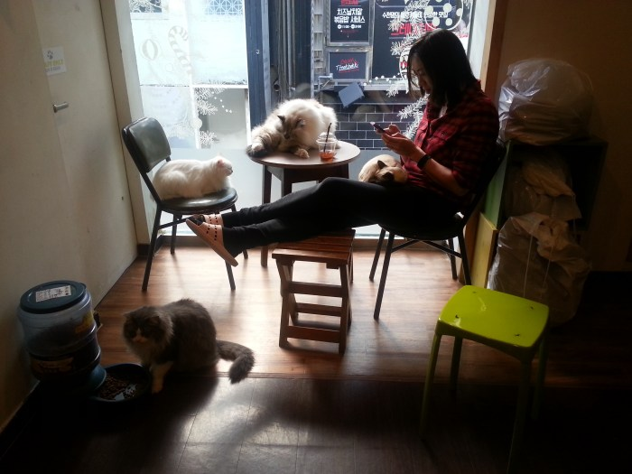 hanging out at a cat cafe, seoul.