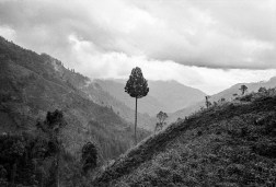 Lonely tree: A view before entering the dark thick canopy of Latimojong rain forest