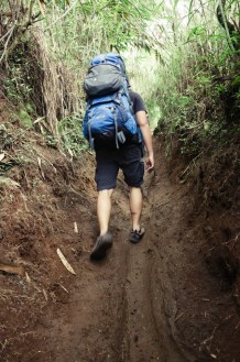 The v-shaped trail