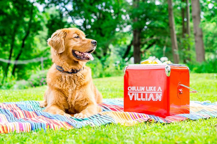 Dog and Ice Cooler - Deck out your cooler with one of these free cut files for the Cricut or Silhouette! These ice cooler decals are a fun way to make your cooler, well, cooler!