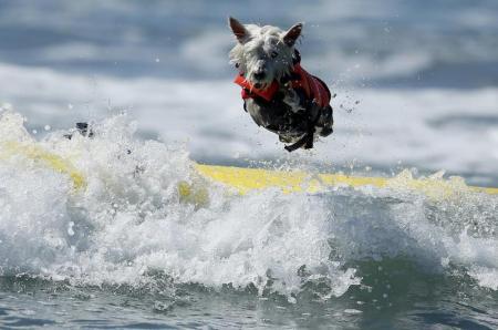 surfinDog