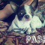 Pabro