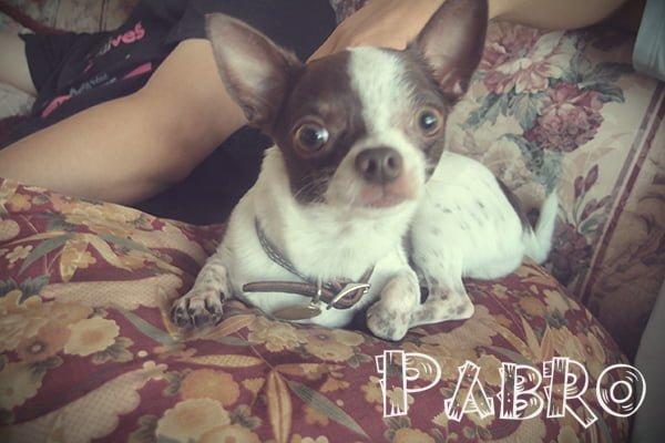 pabro2