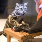 cat_affliate