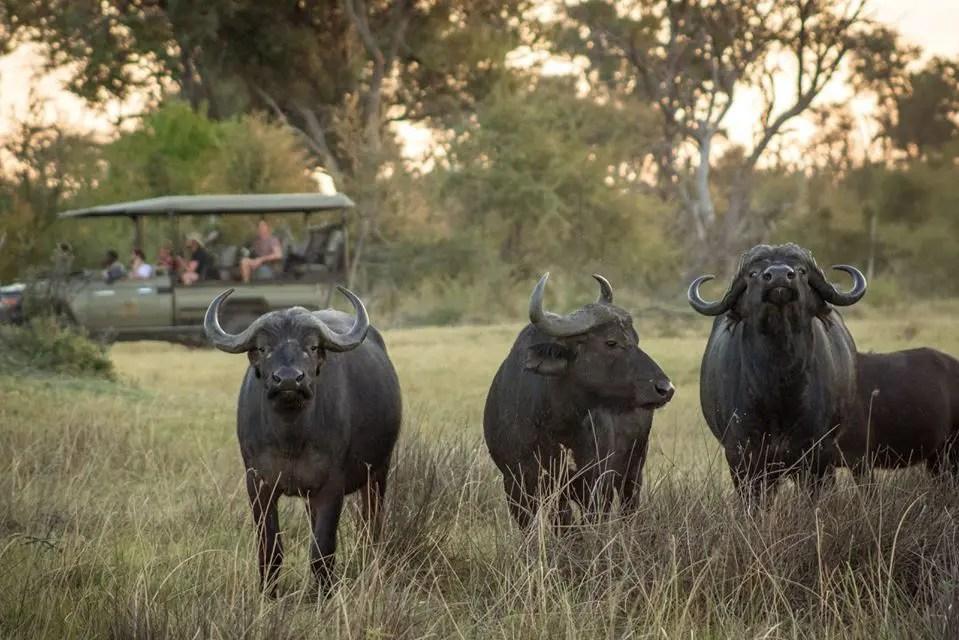 southern dynasty safaris sustainable giveback safari service