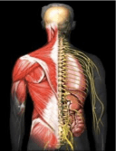 Don't Blame The Muscles When It Is Actually Your Nervous System