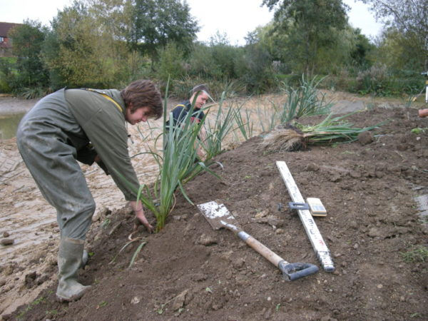 Water Hawthorn Planting Depth