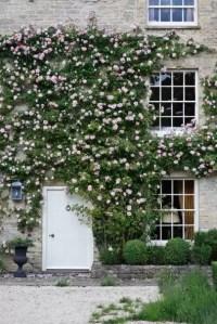 Plants For Window Boxes & Front Garden Ideas | House & Garden