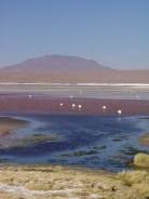 04.04.16 Laguna colorada (13)