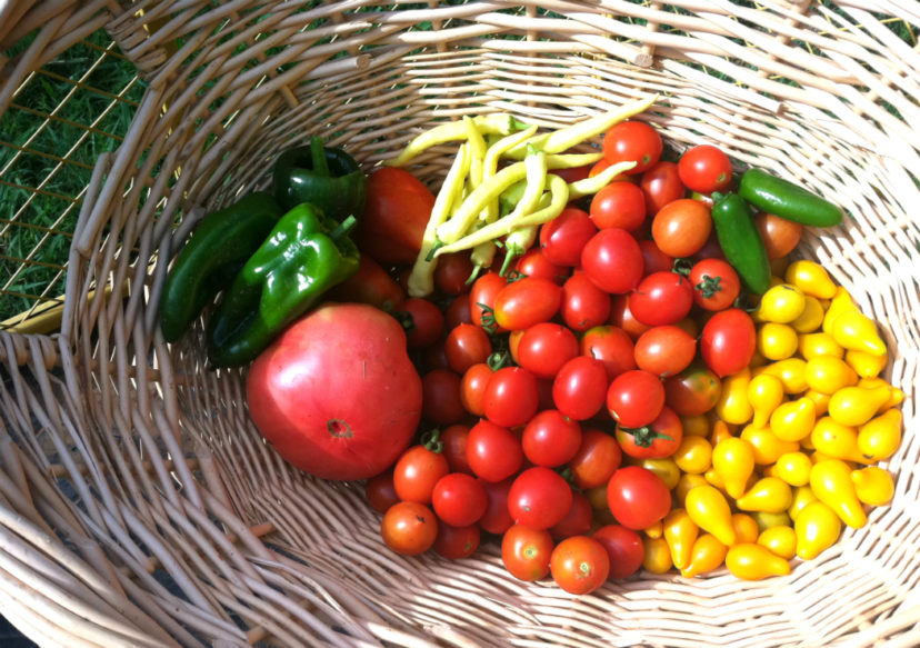 Planning A Garden Home Garden Information Center