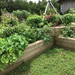 Raised Beds Home Garden Information Center