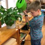 Indoor Plants For The Classroom Home Garden Information Center