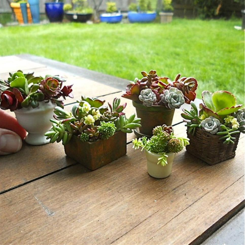 Ideas For Succulent Container Gardens HGTV