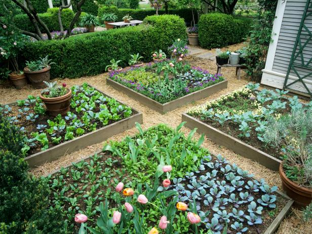 Raised Garden Beds HGTV