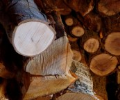 best type of wood for fireplace